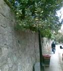 oxford-2010_073